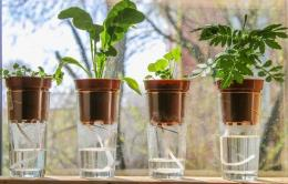 Ide Menanam Sayuran Hidroponik Dari Bahan Bekas | pinterest.com/savvygardening