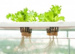Ide Menanam Sayuran Hidroponik Dari Bahan Bekas | gardeningknowhow.com