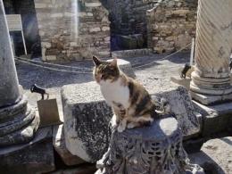 Kucing di Efesus.   Sumber: Dokumentasi Pribadi