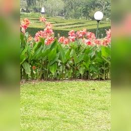 foto pemandangan kebun mawar situhapa | sumber : dok.pri diolah dengan incollage/ yunita kristanti