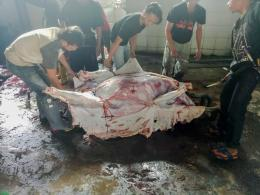 Gambar 2.1 ~ Pengulitan hewan qurban yang telah dipotong   Dok. pribadi