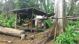 Rumah Orang Rimba di dalam TNBD. (Foto : Elvidayanty/dok.KKI Warsi)