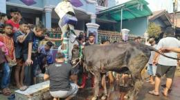 pemotongan hewan kurban tahun 2019 (dok. tribunnews.com)