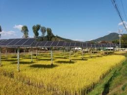 PLTS terintegrasi dengan lahan padi di Korea (www.businesskorea.co.kr)