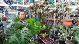 Janda Bolong (Monstera), tanaman hias yang mahalnya melebihi sepeda lipat (Gambar: Suharli via pekanbaru.tribunnews.com)