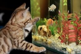 Ilustrasi Memelihara Ikan dari Sisi Feng shui (sumber: pixabay.com/Irina_kukuts)
