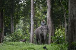 mediacenter.riau.go.id / Gajah di antara pepohonan, dari situs media center riau