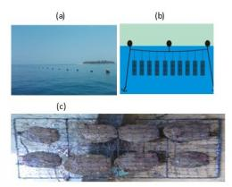 (g. 2.4 (a) pelampung (b) ilustrasi keranjang tento dalam air (c) pocket net.)   dokpri