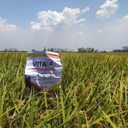 Pupuk Vita 4 di untuk tanaman padi (Sumber: triberkatagro.com)