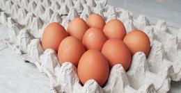 Gambar Telur (Dok. Pribadi)