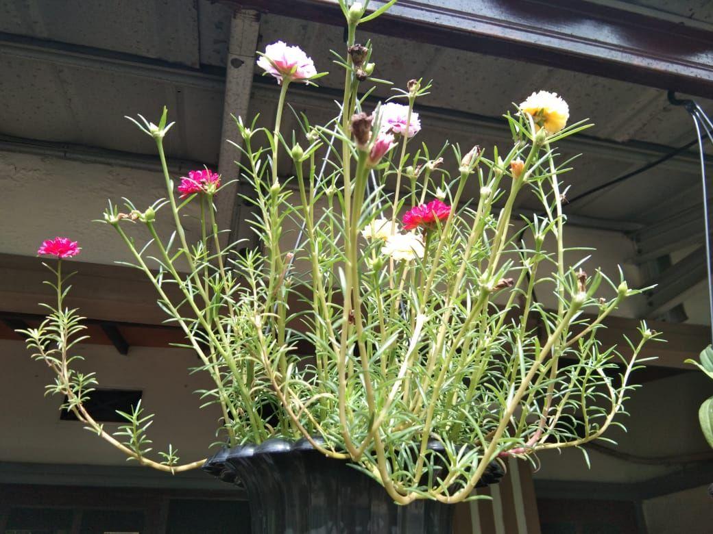 Bunga Warna Warni yang ditanam Istri