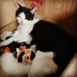 Iya! Kucing yang tadi beserta anak-anaknya :) (dokpri)