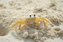 (foto: oceanatlanticrentals.com)