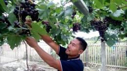 Ilustrasi seorang Bapak Berkebun Anggur. Sumber situs metrosulawesi