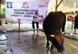 Zainul Muslimun mempraktikkan cara menyembelih hewan. Foto: pwmu