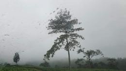 Kabut pagi dalam perjalanan menuju curug (Foto : koleksi pribadi)