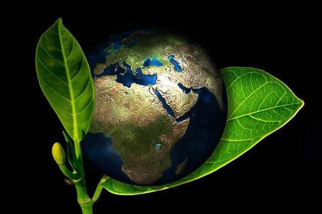Dalam selubung daun. Sumber gambar: Pixabay