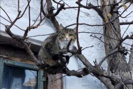 Kucing di atas pohon - foto: HennieTriana-