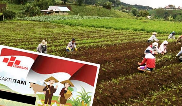 Ilustrasi. Petani sayur desa Rurukan dan Kartu Tani (Artur)
