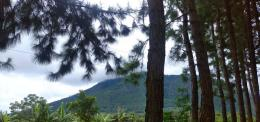 Pepohonan hijau yang rimbun/Dokumentasi Pribadi