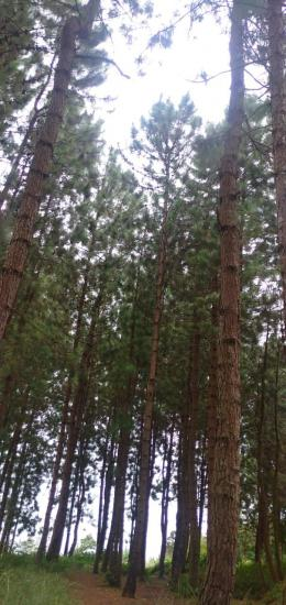 Pepohonan rimbun yang menyegarkan/Dokumentasi Pribadi