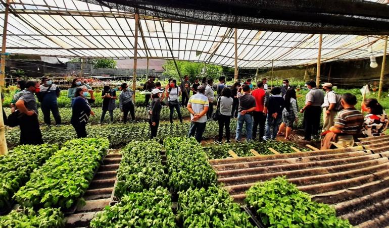 Ilustrasi/gambar Peserta saat menerima materi langsung di Mother Plant Piet Pungus (Foto: Isye M.)