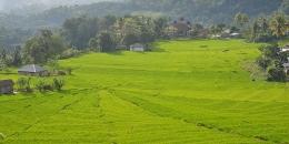 Sawah lingko dengan latar belakang perkampungan dan tanaman niaga di perbukitan Manggarai (Foto: kompas.com/markus makur)