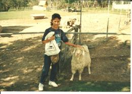 Dokumentasi pribadi/Yang utama perternakan Australia adalah domba, dengan berbagai macam domba. Yang ini adalah Domba Merino, dengan bulu2 yang sangat lebat, serta juga bertanduk lebat.