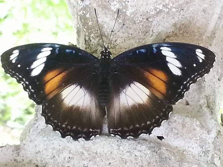 Kupu-kupu. Dokpri Ari Budiyanti