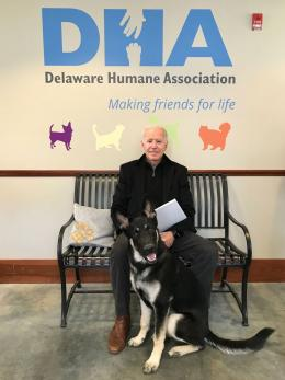 Major ketika diadopsi oleh Joe Biden dari Delaware Humane Association   Foto diambil dari DelawareToday