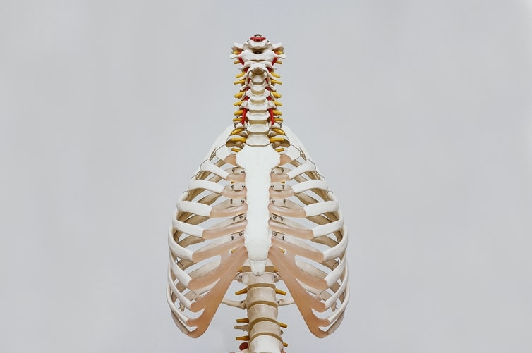 Sistem pernapasan, respirasi oleh paru-paru (Sumber : Nino Liverani via unsplash.com)