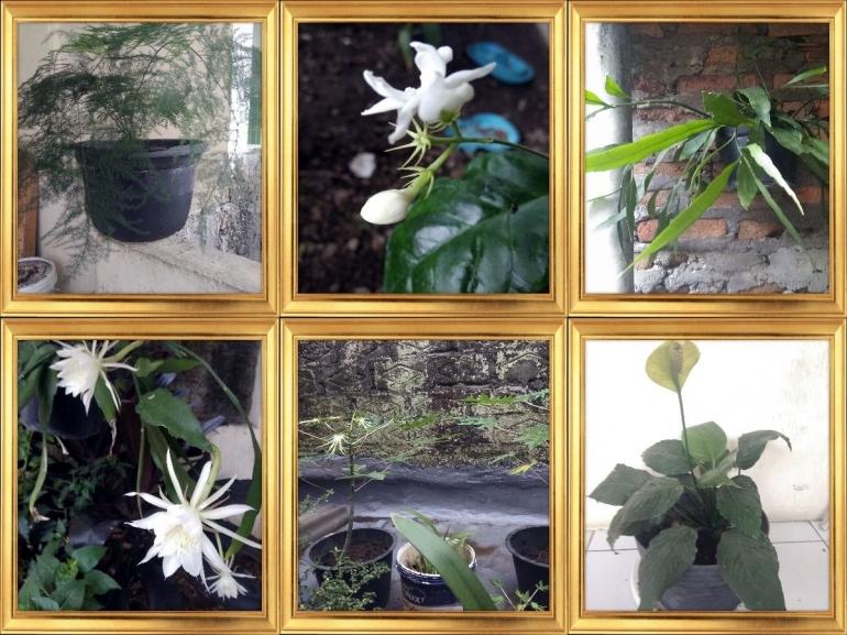 Beberapa jenis flora yang menyemarakkan 'basecamp' (dok.Wahyuni Susilowati)