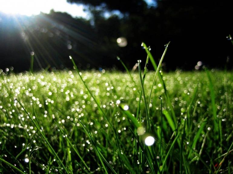 Sejuknya embun pagi menyamabut mentari (ilustrasi gambar: bincangmuslimah.com)
