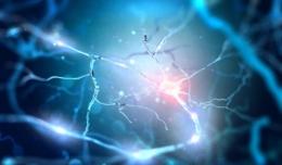 ilustrasi stock Neuron Menghubungkan dengan transmisi elektrokimia/shutterstock