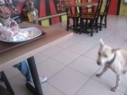 Anjing menunggu kami yang sedang menikmati menu ayam goreng (Sumber: dokumen pribadi)
