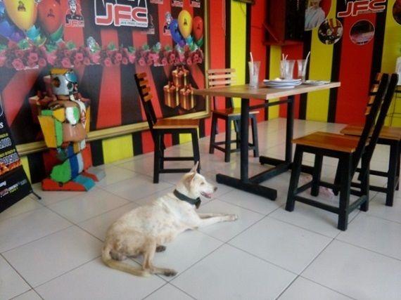 Keberadaan anjing di bawah meja makan di salah satu restoran ayam goreng khas Bali (Sumber: dokumen pribadi)