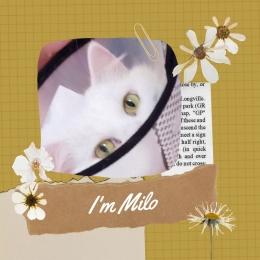 Ilustrasi Milo memakai colar. Dokpri