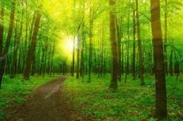 Cahaya di sela rimbun daun (Foto: depositphotos.com)