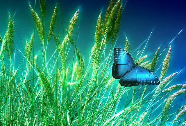 Kupu-kupu dan alam raya. Sumber gambar : Pixabay. Karya : Geralt.
