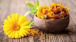 Bunga calendula | Foto diambil dari iStock via Detik