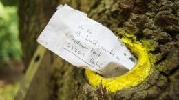 The Bridgeroom's Oak, Mak Comblang Tertua yang Masih Hidup. Ia adalah Sebatang Pohon (streetroots.com)
