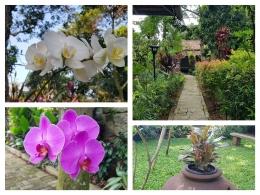 Aneka flora dan pepohonan di kebun dan taman sangat asri dan sejuk (Foto: dokpri)