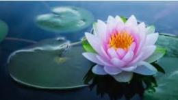 Matamu lotus teduhku (klikdokter.com)