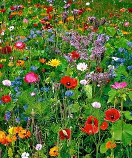 Ilustrasi bunga-bunga liar (theodysseyonline.com)
