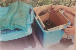 Keranjang cucian untuk pembuatan kompos (foto dk pri).