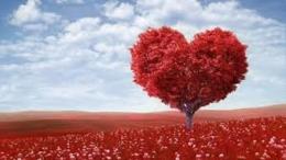 Kasih Dibatang Hidup ( kotbah Kristen.com )