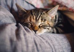 Ilustrasi Seorang Perempuan dan Seekor Kucing (sumber gambar: pixabay.com)