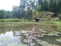 Kolam ikan air tawar (Dokpri)