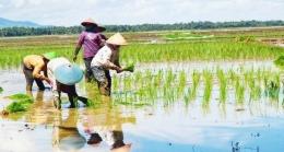 Buruh tani (foto dari tabloidsinartani.com)
