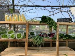 Produk Pertanian Organik Giripurno / dokpri